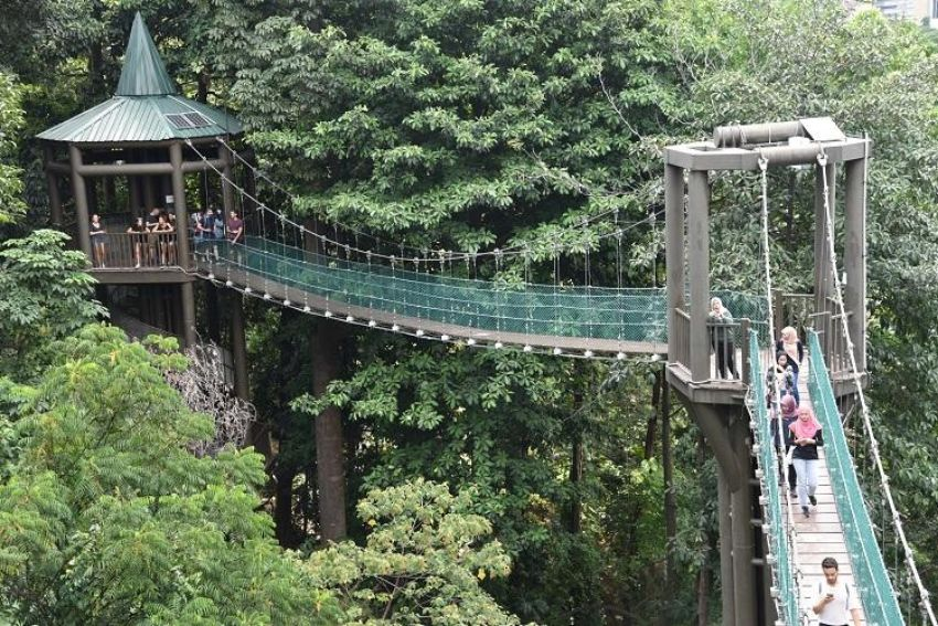 Enjoy a Scenic View at KL Forest Eco Park
