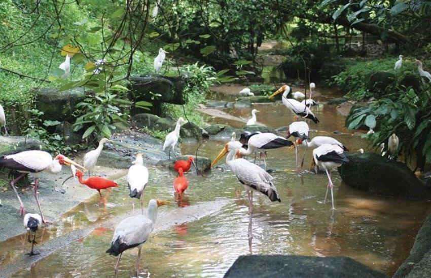Walk Among the Birds at Taman Burung Kuala Lumpur (KL Bird Park)