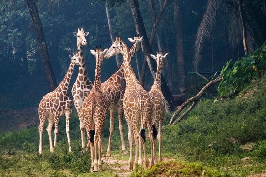 Meet the Residents of the Animal Kingdom at Zoo Negara (National Zoo)